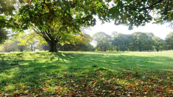 Wollaton Deer Park 2