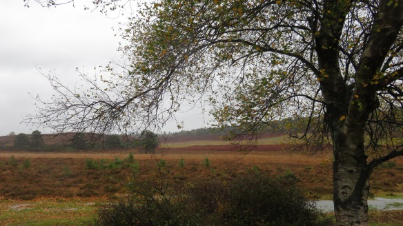 Birch and Heathland
