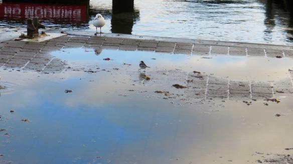 Gull and smaller bird
