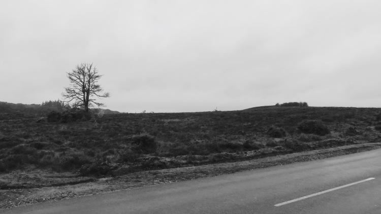 Heathland 3