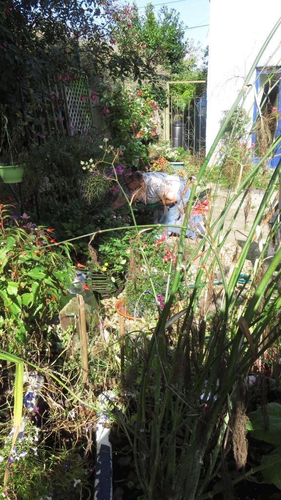 Jackie planting pansies 19.9.15