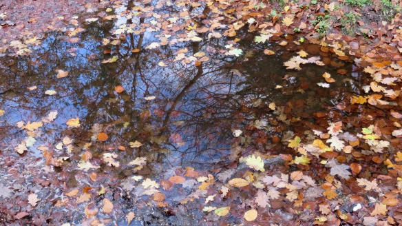 Leaves on reflective pool