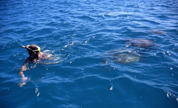 Louisa swimming with turtles 2