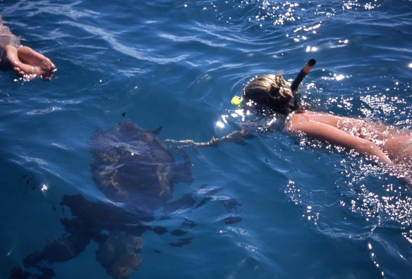 Louisa swimming with turtles 4