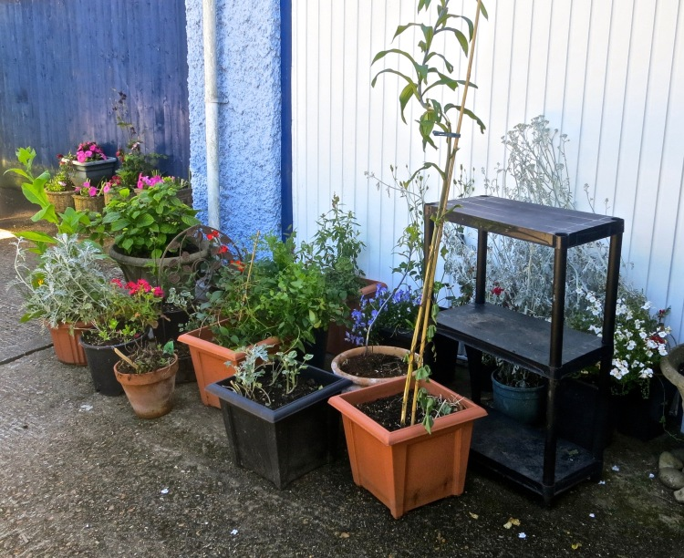 Plants from Walkford