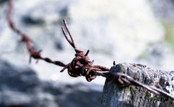 Barbed wire on post 1