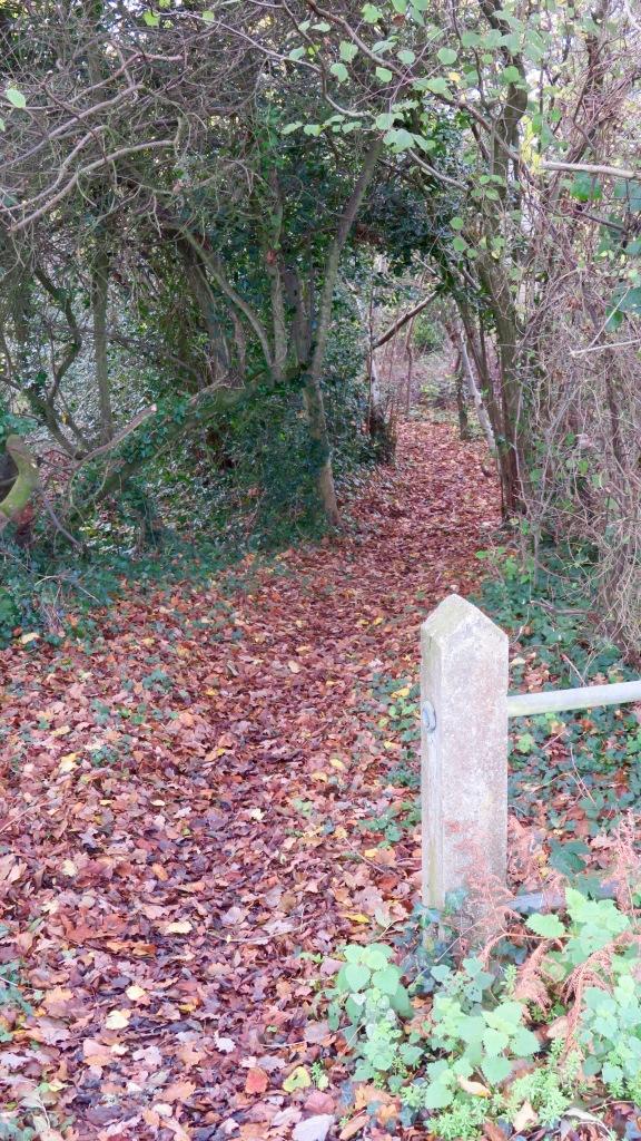 Wood entrance 2