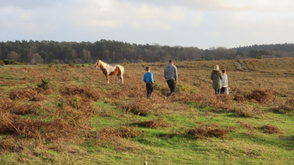 Family tracking ponies 2