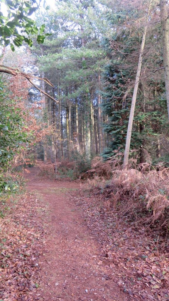 Footpath 2