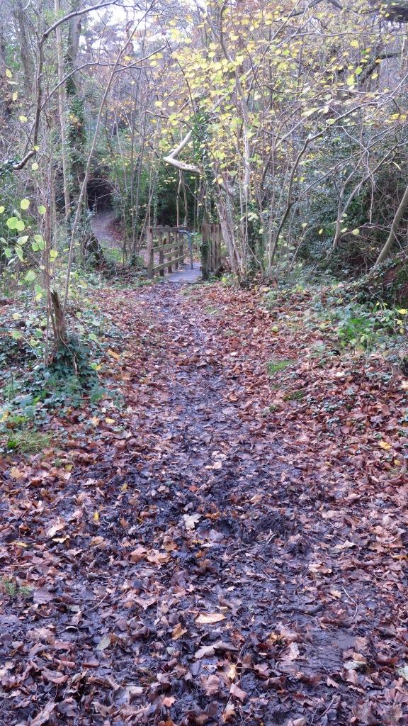 Footpath to bridge