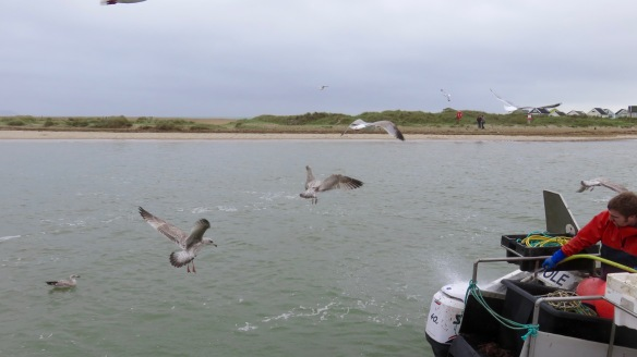 Gulls and fisherman