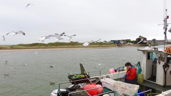 Fisheman and gulls 1