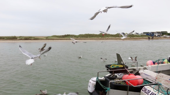 Gulls around boat 1