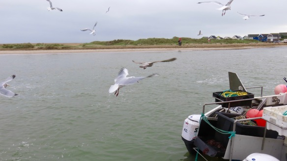 Gulls around boat 3