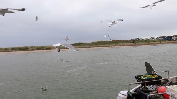 Gulls around boat 2