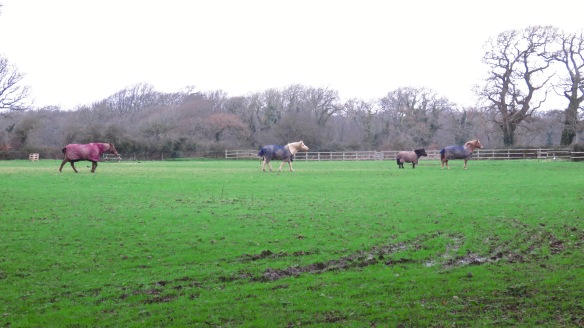 Horses crossing field 1