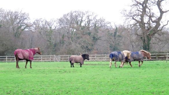 Horses crossing field 2