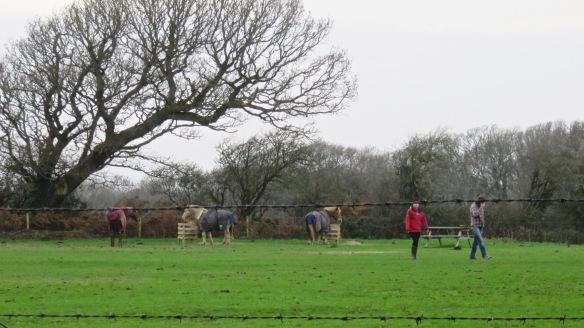 Horses feeding 2