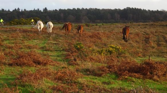 Ponies leaving
