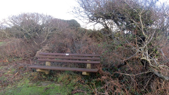 Bench in scrub