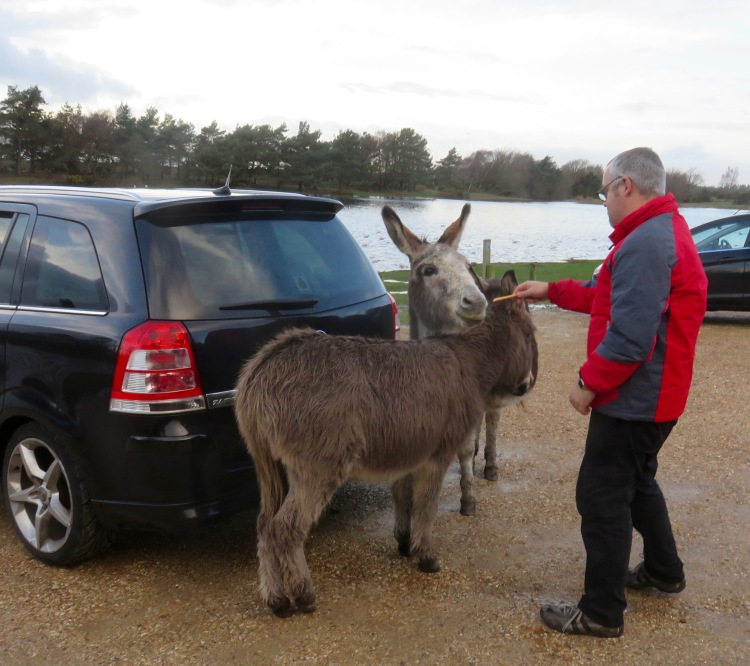 Donkeys being tempted
