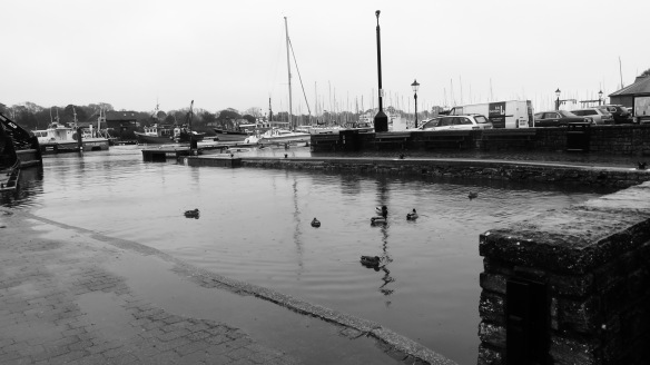 Ducks at quayside