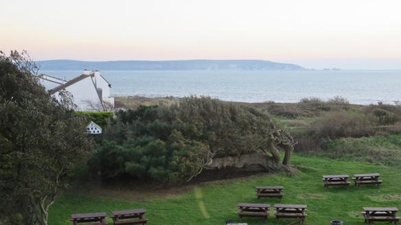 Isle of Wight and garden from Sun Room window