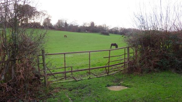 Ponies in field