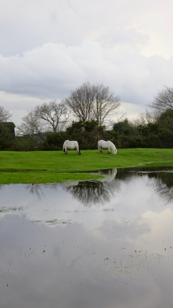 Ponies reflected in pool 2