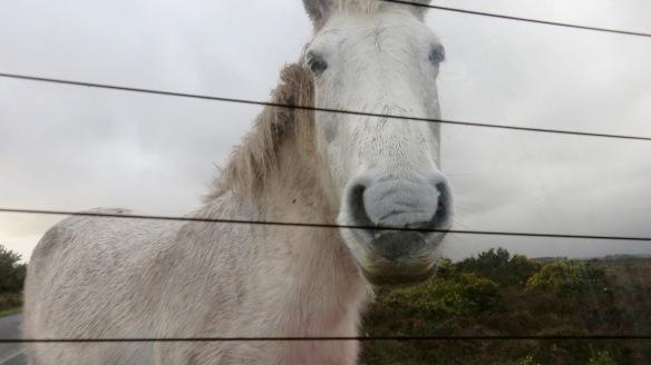 Pony at back window