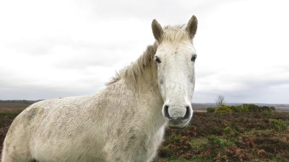 Pony at passenger window