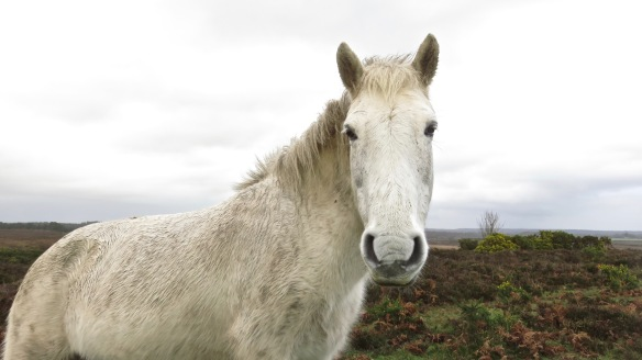 Pony at passenger window