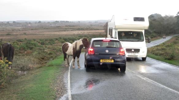 Pony holding up traffic