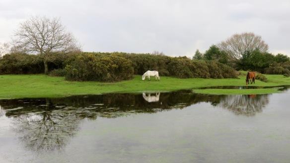 Ponies reflected in pool 1