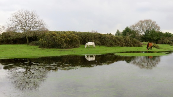 Ponies reflected in pool 1