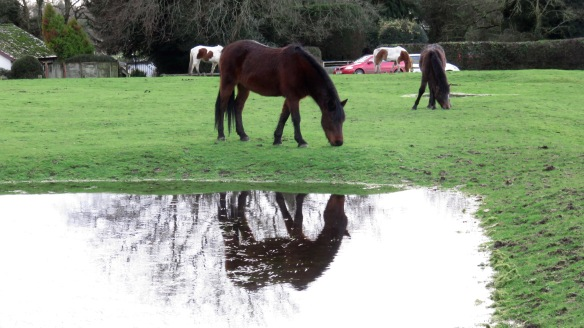 Pony reflected in field 1