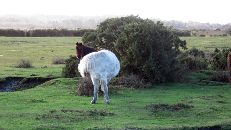 Pony preening