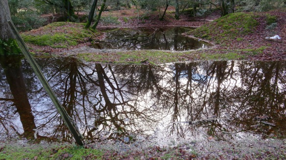 Reflections in pools 1