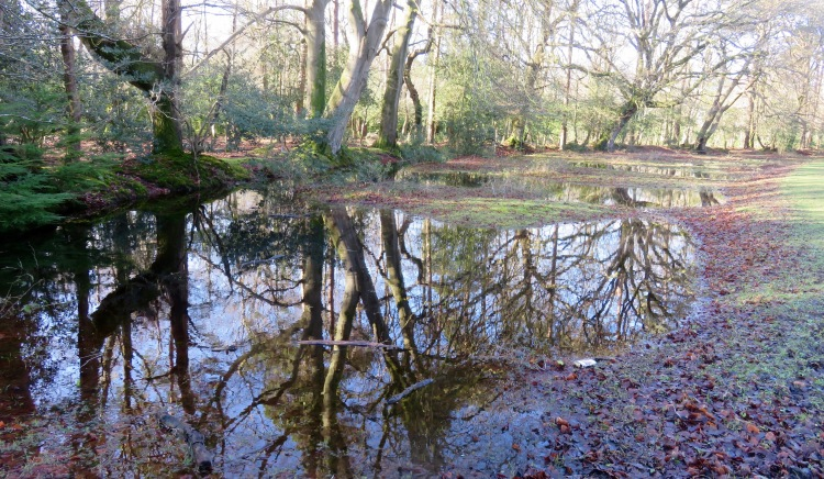 Reflections in pools 6