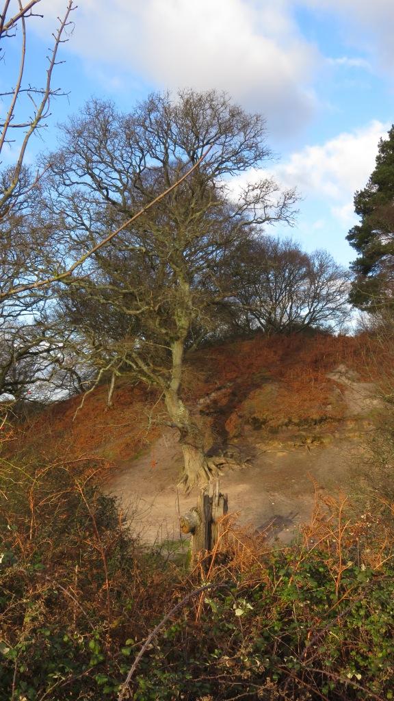 Rockford Common 4
