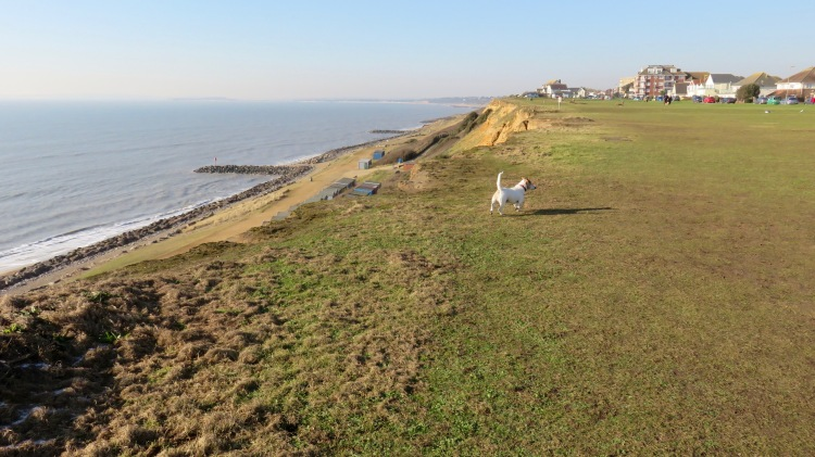 Scooby on clifftop