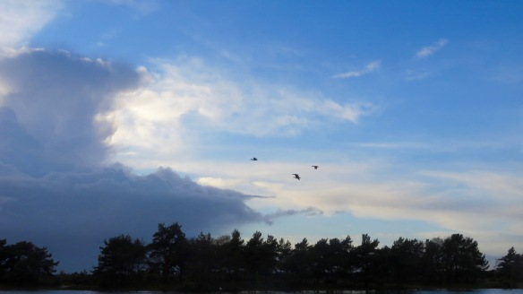 Skyscape with geese