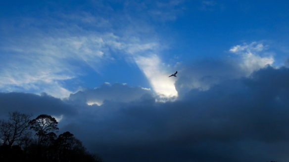 Skyscape with gull