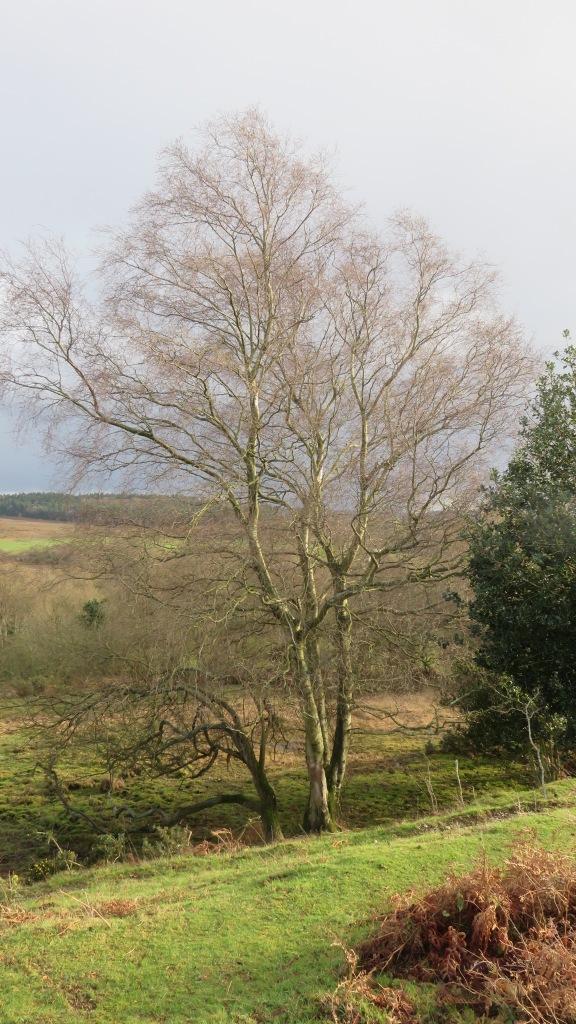 Tree in landscape 1