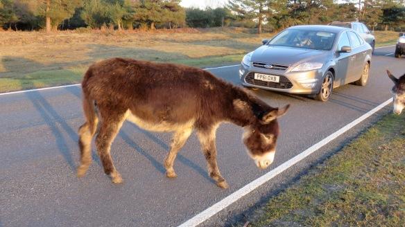 Donkeys 1