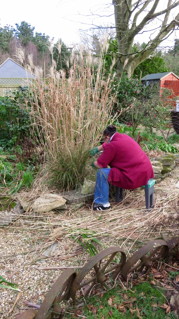 Jackie pruning grass 1