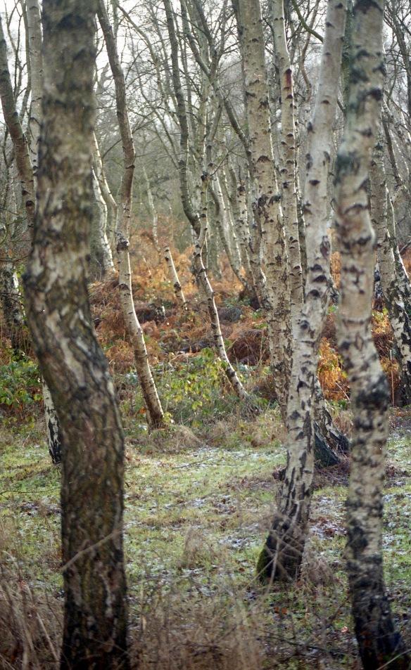 Sherwood Forest 2