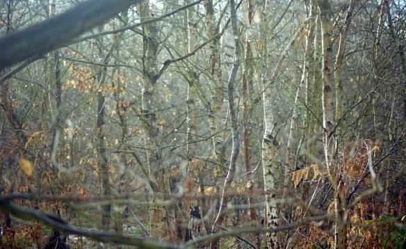 Sherwood Forest 12.03 3