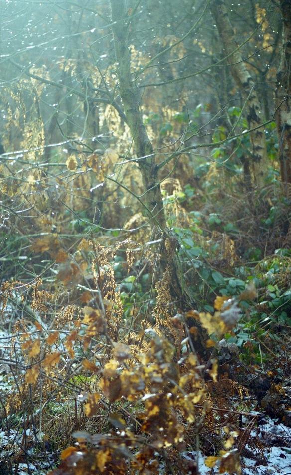 Sherwood Forest 4