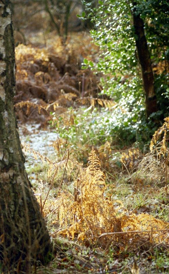 Sherwood Forest 12.03 5
